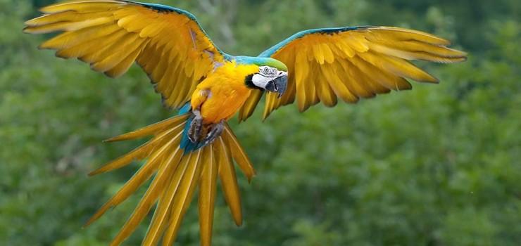Guacamayo-azul-y-amarillo