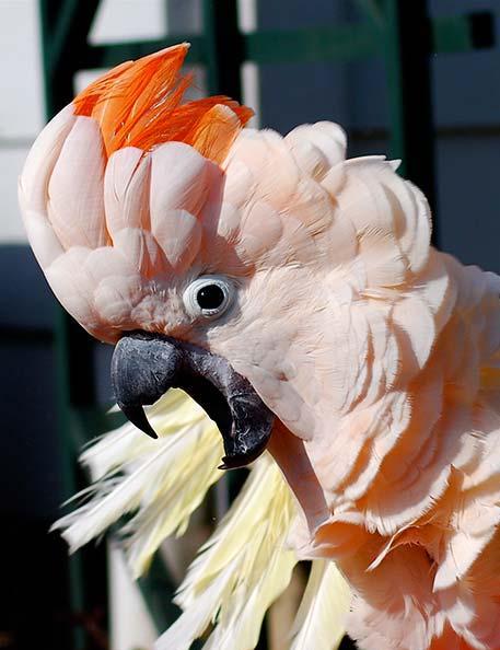 Gerarquía del ave