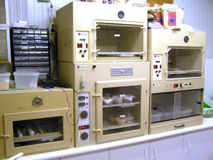 incubadora buemacaws