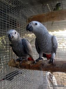 Fotos de nuestros yacos papilleros.