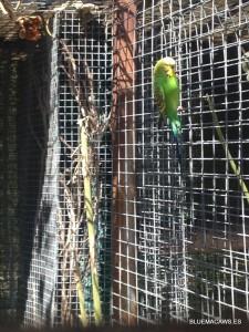 Visitanante inesperado en Bluemacaws