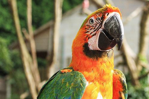 Maui Sunrise Macaw