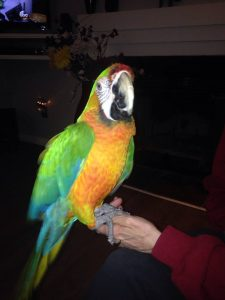 Starlight Macaw
