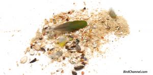 bird-mess