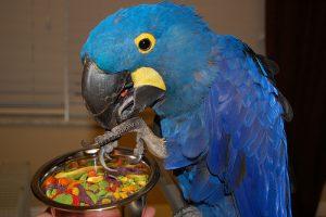 macaw-pellet