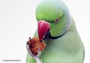 parrot-eating-image