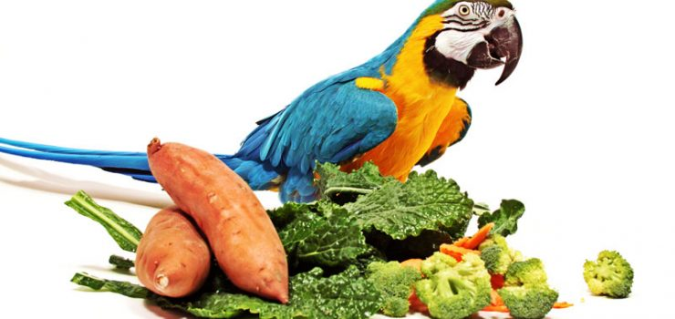 parrot-food_800