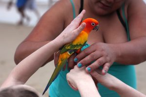 petting-the-Candado-Beach-Parrot
