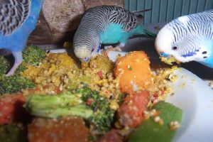 budgie-food-recipes